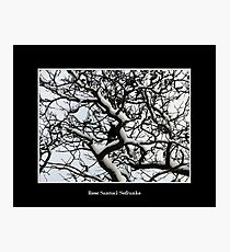 Crow in snow covered trees Photographic Print