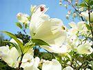 White Dogwood Tree Flowers Landscape art Baslee Troutman by BasleeArtPrints