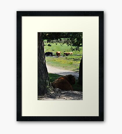 Lazy Sunday Framed Print