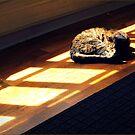 The Catnap by John Tomasko