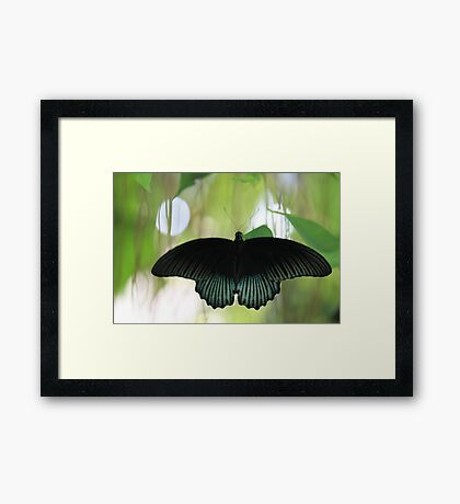 Butterfly in a poem Framed Print