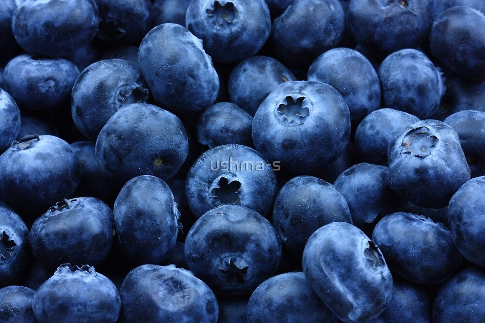 Blueberries by ushma-s