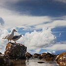 Gulls on the coast by flexigav