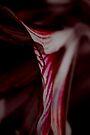 Dark lilly by Penny Kittel