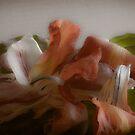 Dried Tulip Flower Petals by Karen Kaleta