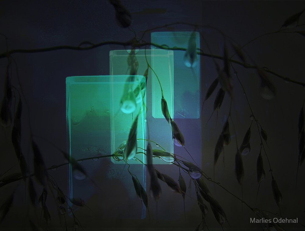 Transparent glasses by Marlies Odehnal