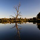 Tree Reflection by John Vandeven