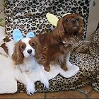 Fiona and Horatio with their Bunny Ears by fionahoratio