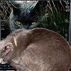 Cyber Cat by © Loree McComb