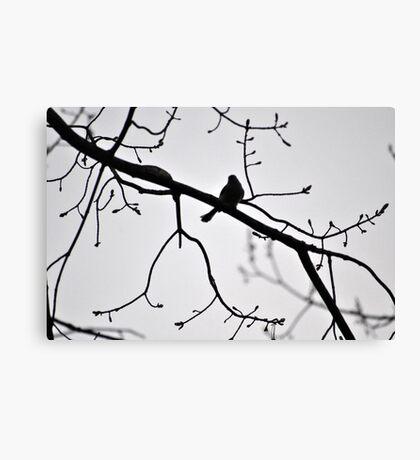Spring Robin Canvas Print