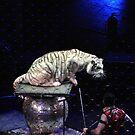 White Tiger by Robin Black