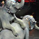 Circus Elephants by Robin Black