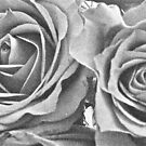 Roses by Christopher Clark