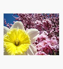 Daffodil Flowers art Pink Tree Blossoms Baslee Troutman Photographic Print