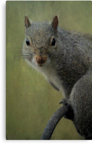 Squirrel Portrait by Renee Blake