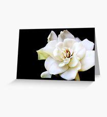 My April Gardenia Greeting Card