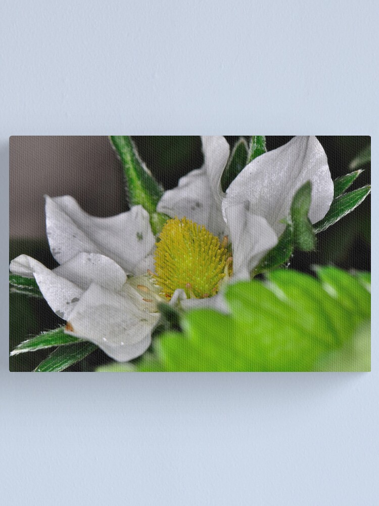 Alternate view of Strawberry Flower Canvas Print