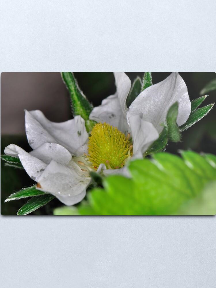 Alternate view of Strawberry Flower Metal Print