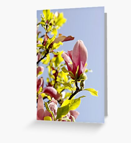 Spring Awakening #1 Greeting Card