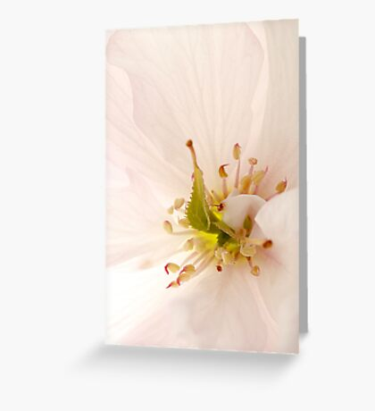 Spring Awakening #2 Greeting Card
