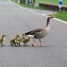 Roadrunners by DutchLumix