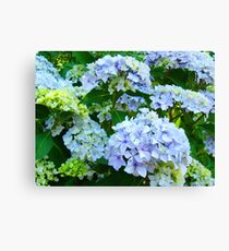 Blue Hydrangea Flowers Green Garden art Baslee Troutman Canvas Print