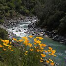 Buttermilk Trail by Patty Boyte