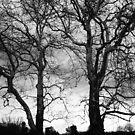 Loomis Trees  by DearMsWildOne