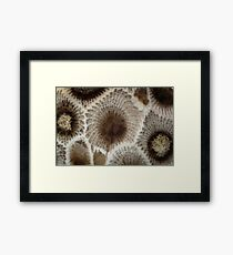 Looking Into a Petoskey Stone Framed Print