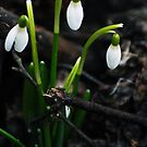 Spring in the forest before Easter by Antanas