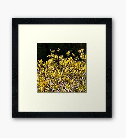 Spring Passion Framed Print