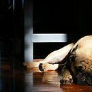 Asleep On A Sunbeam by minikin