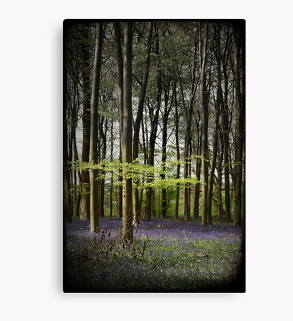 Micheldever bluebell woods Canvas Print