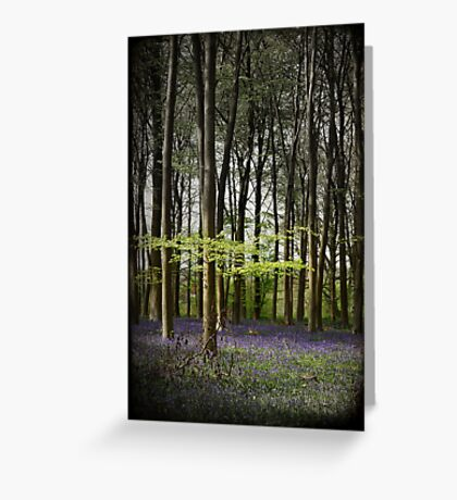 Micheldever bluebell woods Greeting Card