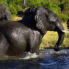 Chobe Adventure by Bobby McLeod