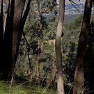 Hillside by Jane Keats