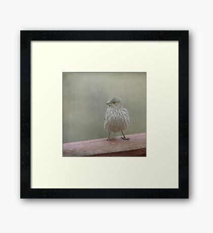 A Little Birdy Told Me Framed Print