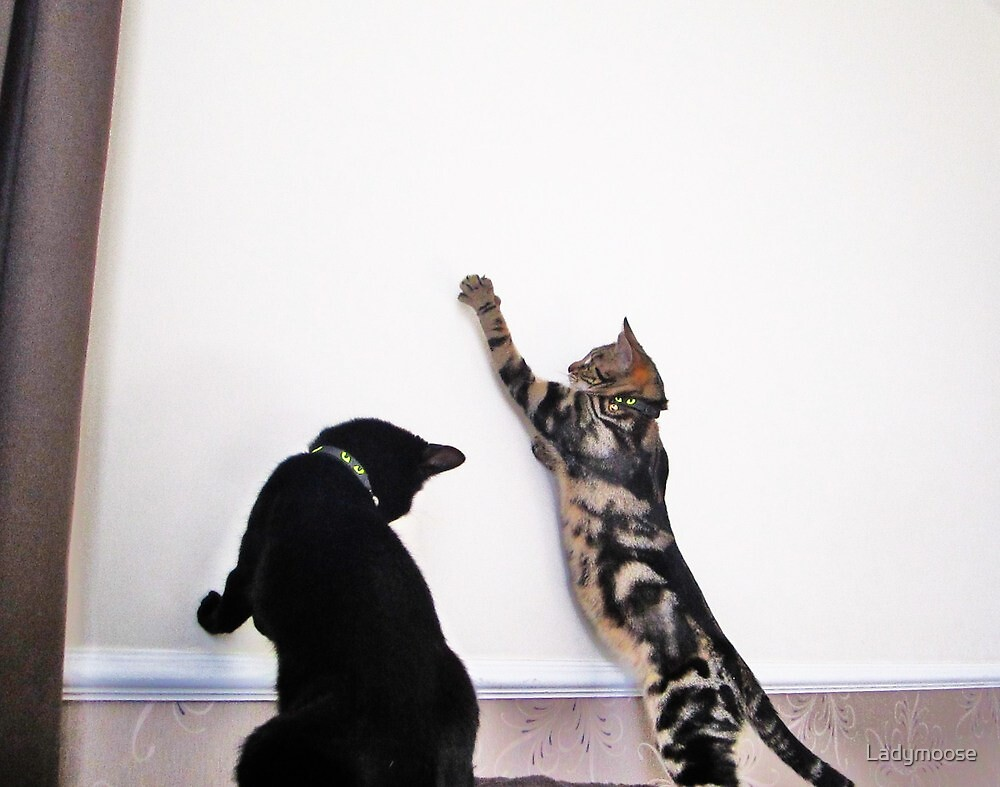 Cat Boogie by Ladymoose