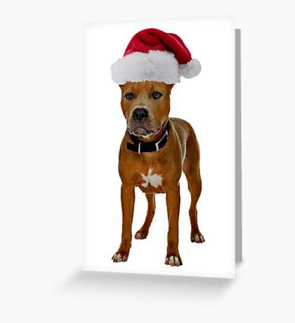 Pit Bull Christmas Greeting Card