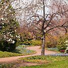 Alone in the Garden by Monica M. Scanlan