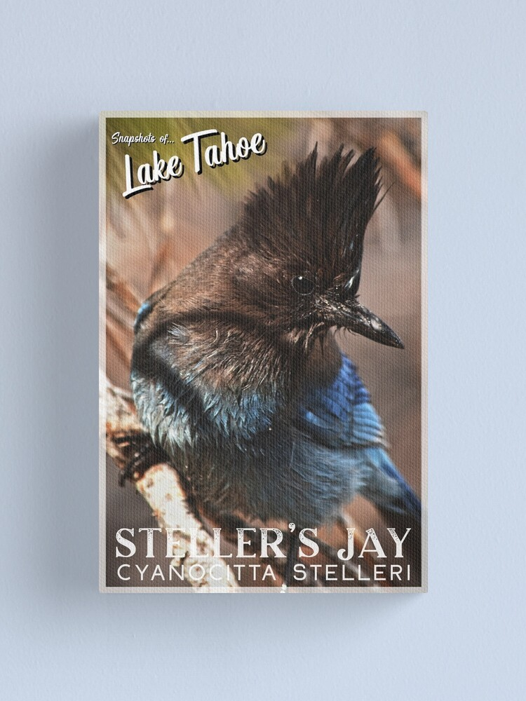 Alternate view of Snapshots of Tahoe: Steller's Jay Canvas Print