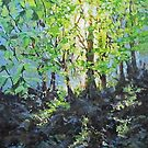 Forest Light by Karen Ilari