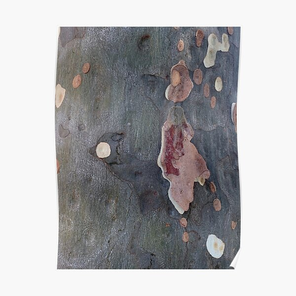 Abstract Gum Tree Poster