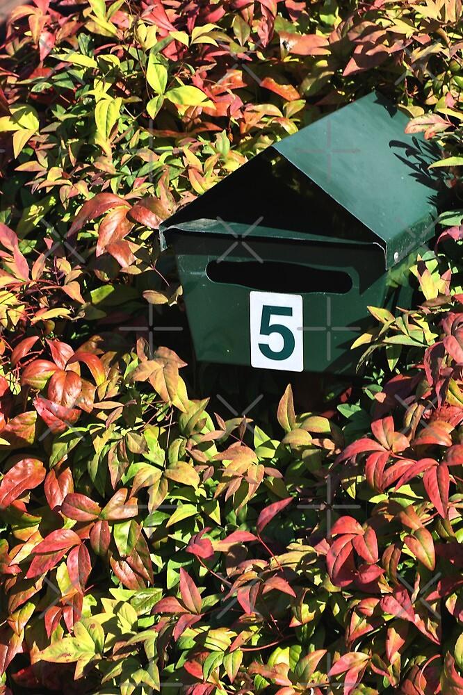 Autumn Leaves by Joy Watson