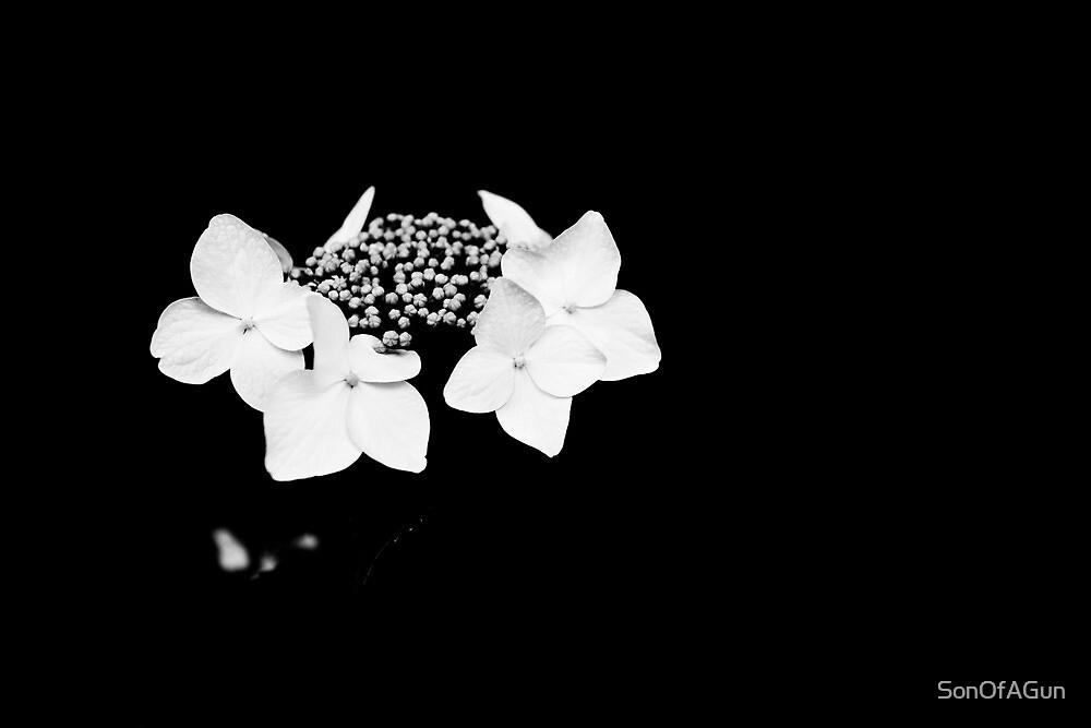 Lucid Dreams by SonOfAGun