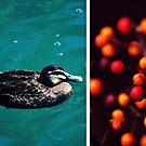 Duck Berries by oddoutlet