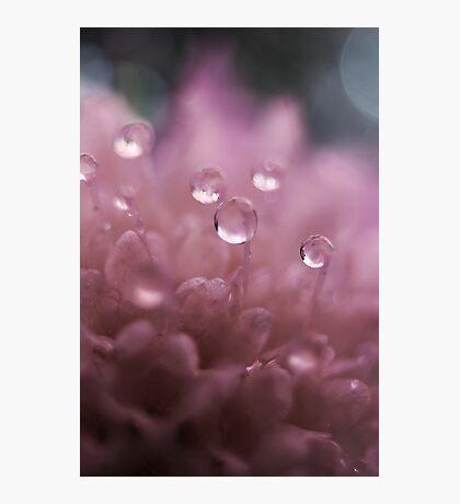 Glass Pink Photographic Print