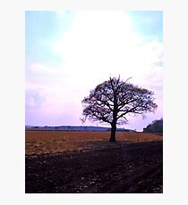 Old Oak Photographic Print