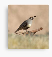 Quail rising Canvas Print