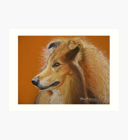 Rough Collie  Art Print